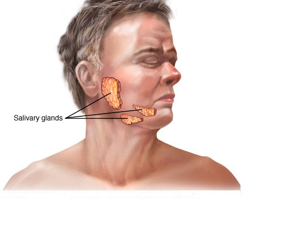 Salivary Glands